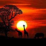 africa-animal-animals-417142.jpg